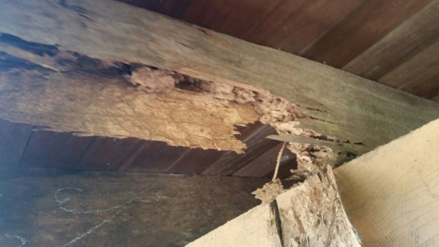 Termite damage supporting beam.